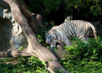 Зоопарк Дусит (Бангкок)
