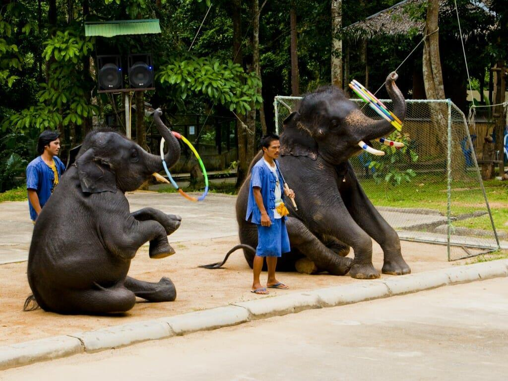 Намуанг сафари-парк (Namuang Safari Park)