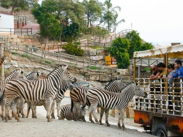 Сафари-парк в Эстепоне