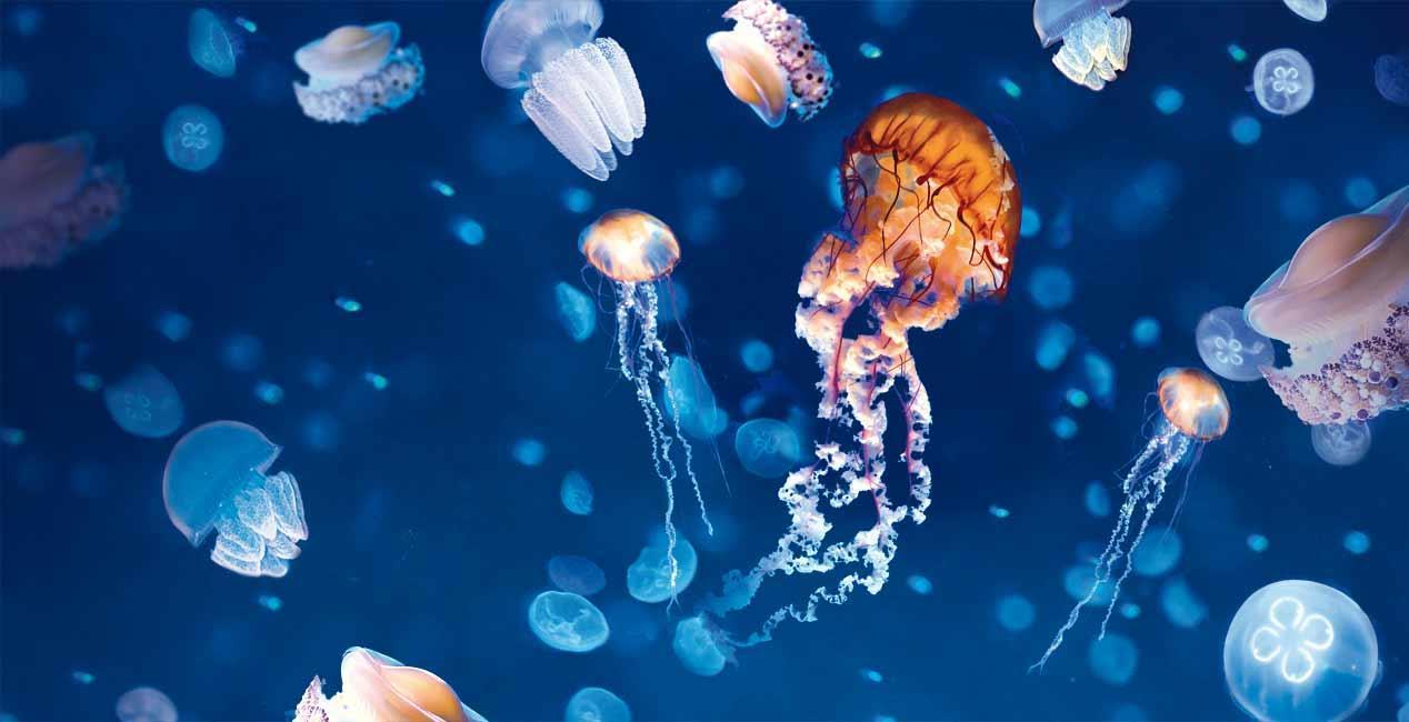 Siam Ocean World медузы