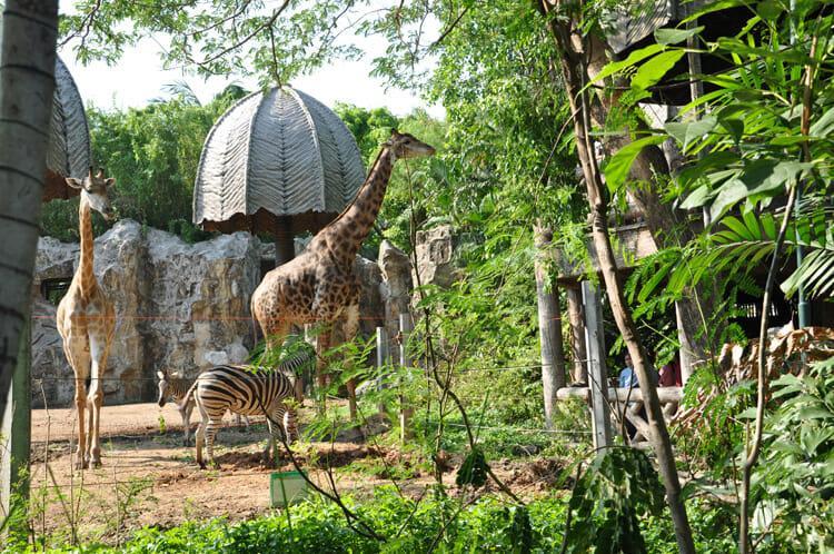 Зоопарк-Дусит-Бангкок-жирафы