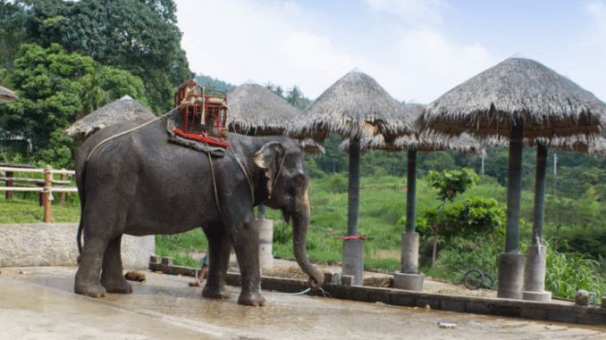 Намуанг сафари-парк (Na muang Safari Park)