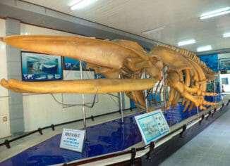 Институт Океанографии в Нячанге
