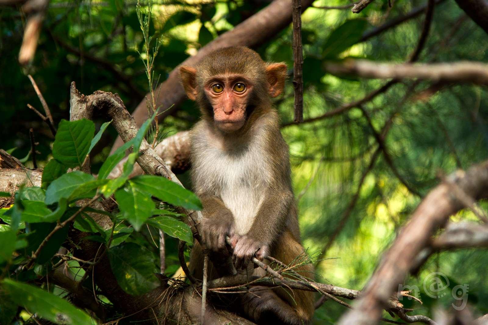 Остров обезьян Хон-Лао в Нячанге, Вьетнам.