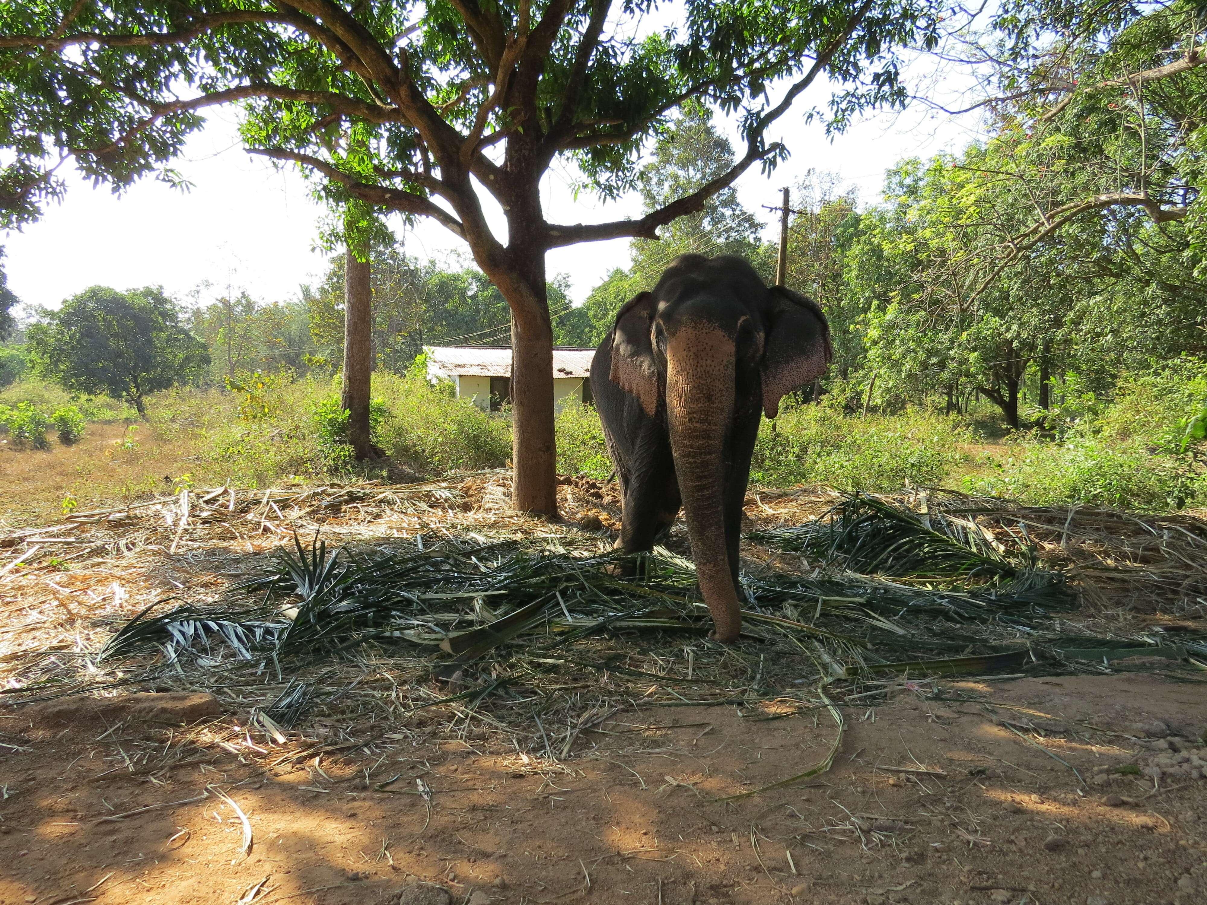 Сахакари (Sahakari) слоны