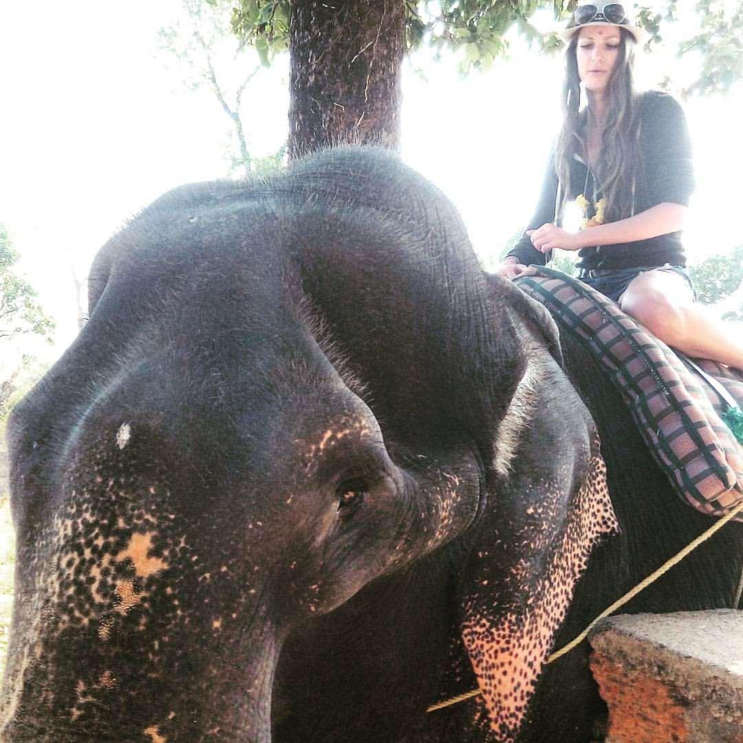 плантации специй, катание на слонах