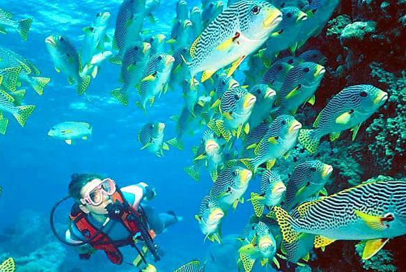 Еще одна замечательная местная достопримечательность – это коралловый риф, располагающийся недалеко от берега. Дайверы любят понырять около него, изучить подводный коралловый мир
