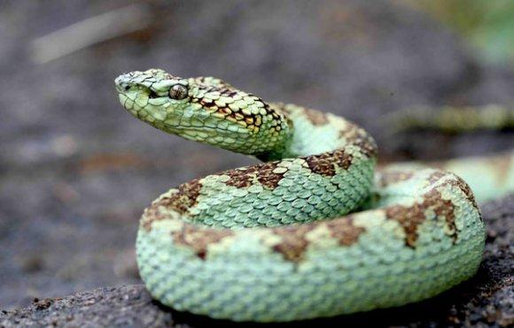 Заповедник Котигао, змеи