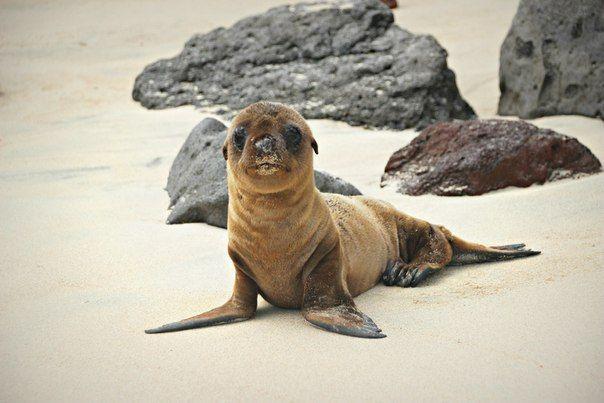 Галапагосские острова Эквадора продолжают заманивать путешественников в 600 милях от Тихого океана