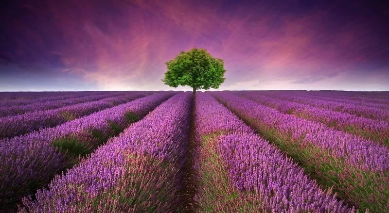 Этот регион юго-восточной Франции заполнен лавандовыми полями, сонными рыбацкими деревнями, римскими руинами и множеством живописных пейзажей