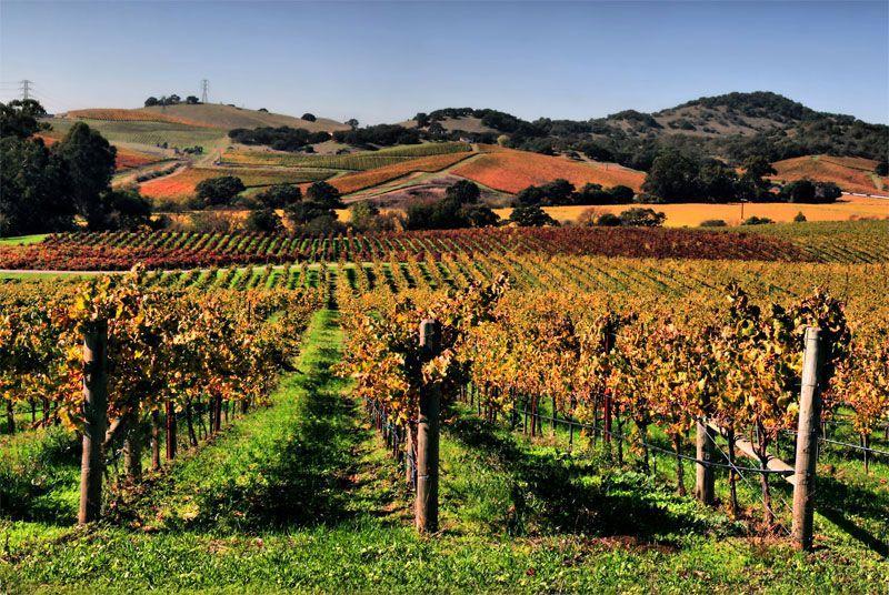 Виноградники, Долина Напа, Калифорния, США