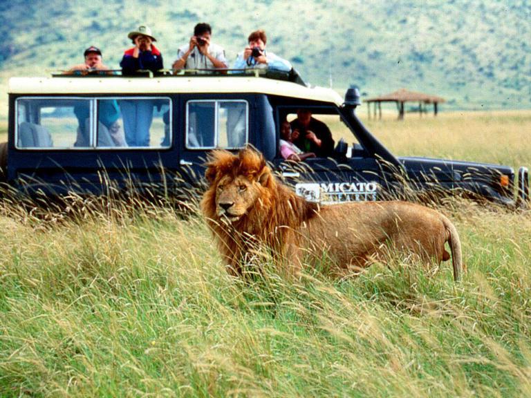 Замбия Африка большого незамеченное назначение сафари и, безусловно, лучше всего его значение. Слоны, леопарды, крокодилы, бегемоты, жирафы