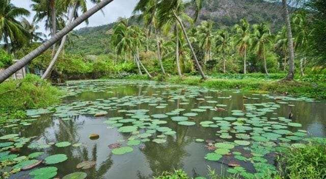 Национальный парк Кон дао, Вьетнам