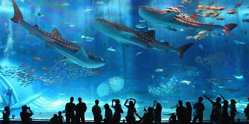 Барселонский аквариум