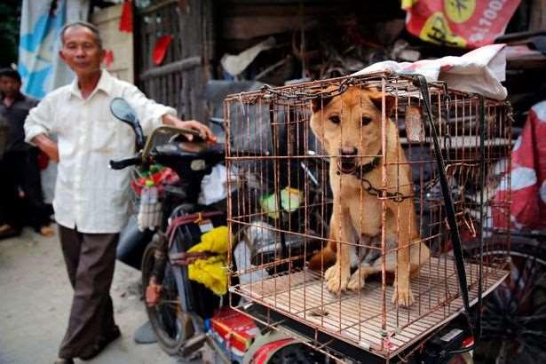 В Китае употребляют в пищу мясо кошек и собак