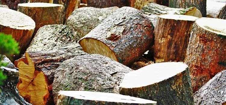В Китае ежегодно вырубают десятки миллионов деревьев для изготовления около 80 млрд одноразовых палочек для еды.
