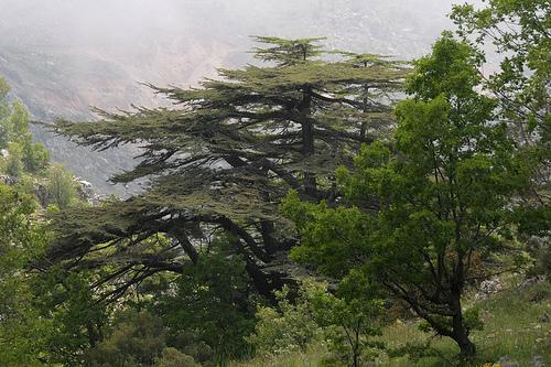 Является одной из самых больших зеленых зон, доступных для публики в столице. Он расположен между районами Qasqas и Tayouneh. На его территории растут растения и деревья, которые являются экзотическими и редкими в Средиземноморском регионе. Открыт для любителей ходьбы, бега, занятий йогой и спорта ежедневно с понедельника по пятницу с 7:00 до 14:00.