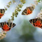 Некогда была полна бабочками потрясающей красоты, но с развитием туризма популяции резко сократились, поэтому сегодня можно просто прогуляться в парк и полюбоваться местными красотами