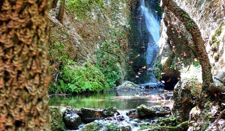 Небольшое ущелье тянется вдоль ручья, а на деревьях, что растут по кромке воды, размещаются тысячи бабочек медведицы четырехточковой
