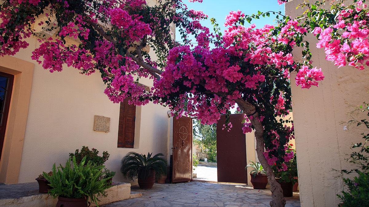 Весенний период на Родосе начинается в феврале и заканчивается в апреле. В этот промежуток времени погода достаточно теплая и влажная, чтобы остров заполонили яркие цветы и растения