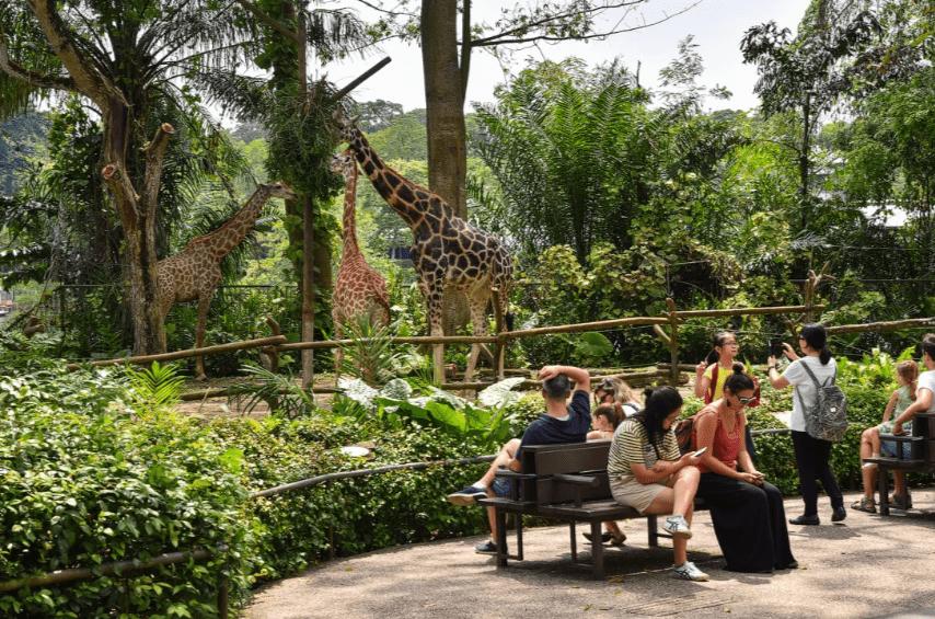 Зоопарк Мандай Для животных в этом зоопарке созданы условия приближенные к естественным. Вольеры предпочтительно открытого типа или со стеклянными ограждениями