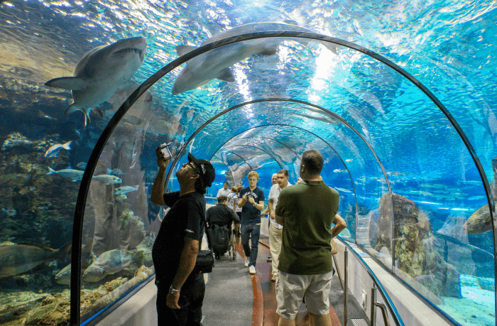 Аквариум представляет собой самый длинный в мире стеклянный тоннель, проходя по которому можно наблюдать за жизнью рыб, животных и других обитателей моря. Это также самый большой европейский аквариум.
