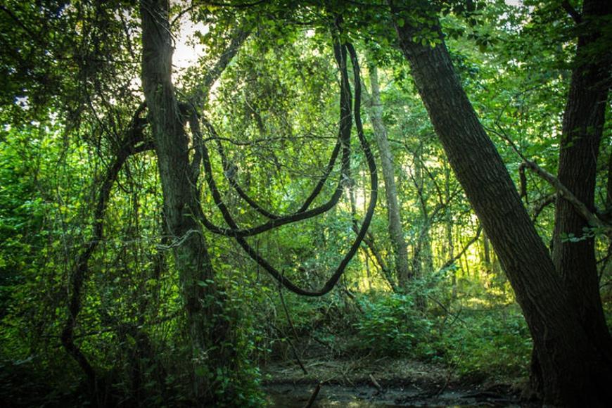 Приблизительно в 200 км на юго-восток от Махачкалы, в дельте рек Самур и Малый Самур находится реликтовый лес. К нему прилегают территории России и Азербайджан