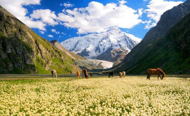 Авиасообщение между Россией и Киргизией было возобновлено 21 сентября. Рейс из Москвы в Бишкек отправляется 1 раз в неделю (туда – в четверг, обратно – в пятницу)