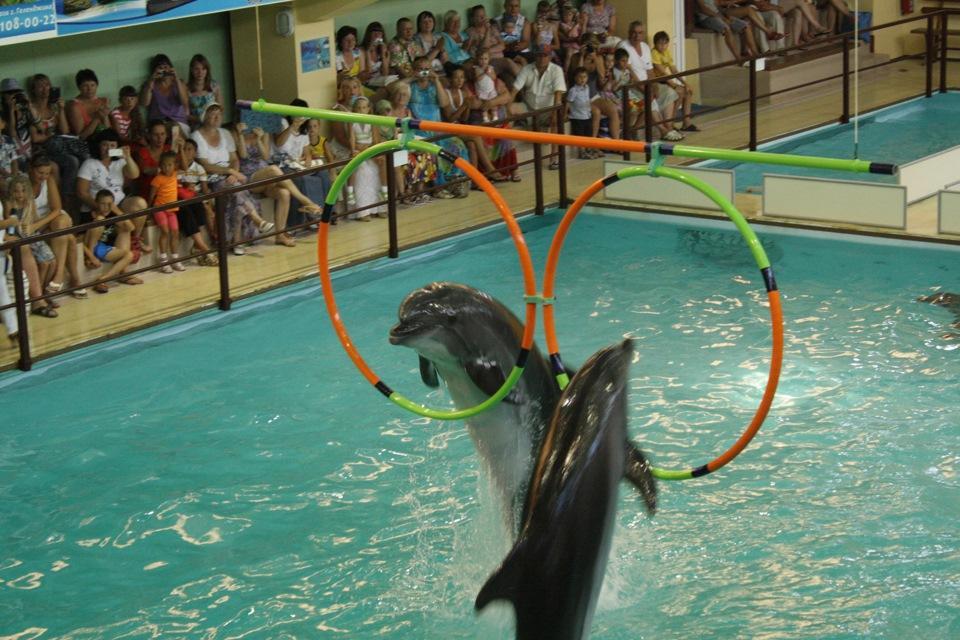 Программы с участием дельфинов, морских котиков, моржей и белух может посетить каждый в знаменитом Геленджикском дельфинарии