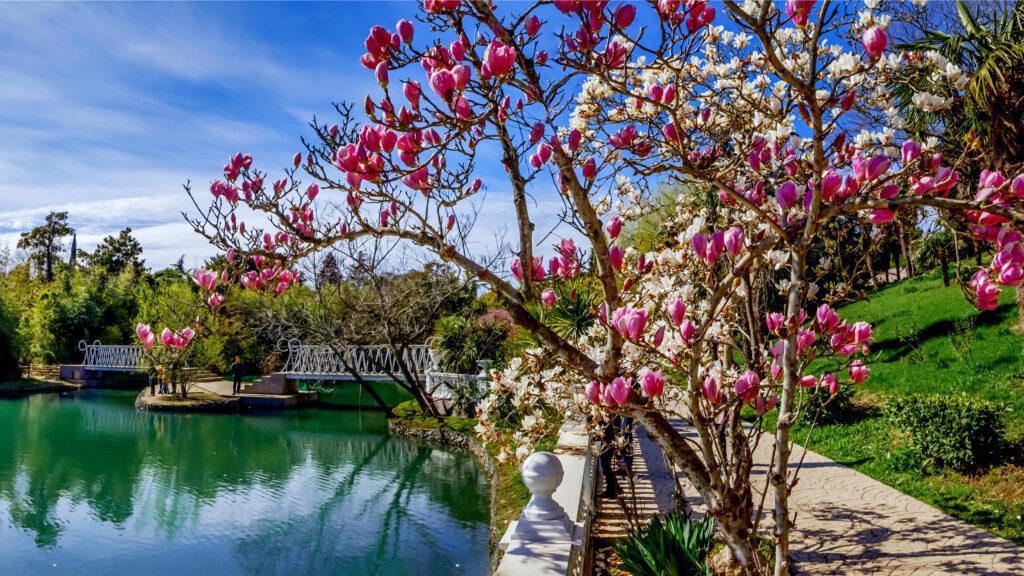 """Находится на берегу реки Мзымты с 1910 года и чем-то напоминает """"Дендрарий"""", однако он гораздо меньше. Там растет большое количество субтропических растений"""